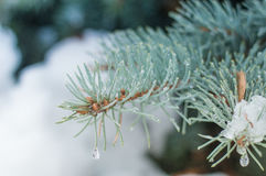 The frozen branch Royalty Free Stock Photos