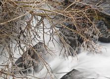 Frozen Branches. On the waterfall of a small river. A typical cold winter scene Royalty Free Stock Images
