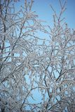 Frozen branches. On blue sky background Royalty Free Stock Photography
