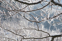 Frozen branches. Cold winter image with Frozen branches Royalty Free Stock Photography