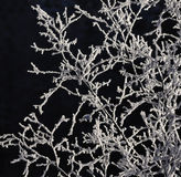 Frozen branches Royalty Free Stock Photo