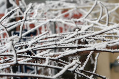 Frozen branches Stock Image