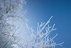 Frozen branches Royalty Free Stock Photography