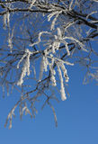Frozen branches against blue sky Stock Photography