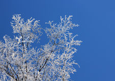 Frozen branches against blue sky Royalty Free Stock Photo