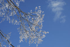 Frozen branches in the blue sky Stock Photography