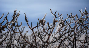 Frozen branches. Bush of branches, chained into the ice, near Gullfoss waterfall, Iceland Royalty Free Stock Photos