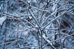 Frozen branches. The frozen bush branches winter stock photos