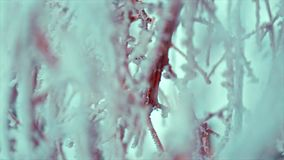 Frozen Branches on Clear Bright Sky Background stock footage