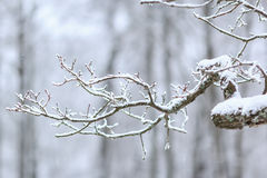 Frozen branches closeup Royalty Free Stock Images