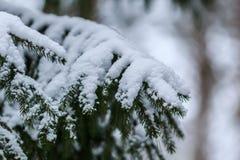 Frozen branches closeup Stock Photo