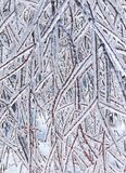 Frozen branches closeup. Closeup of frozen branches on a tree after a winter ice storm Stock Photo