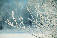 Frozen branches covered in frost Royalty Free Stock Images