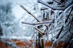 Frozen branches Stock Photography
