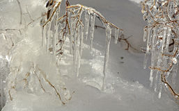 Frozen branches Royalty Free Stock Image