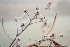 Frozen Branches. On a misty morning in Sussex Stock Image