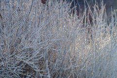 Frozen branches in morning light Royalty Free Stock Photography