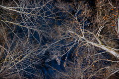 Frozen Branches Overhead - Color Inverted Stock Images