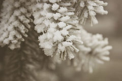 Frozen branches Royalty Free Stock Photos