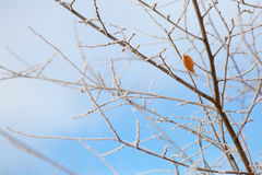 Frozen branches and sky Royalty Free Stock Image