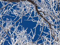 Frozen branches on a sky background Stock Photo