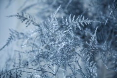 Free Frozen Branches With Ice Crystal On A Black Background. Hoarfrost Branch On Blue Snow. Royalty Free Stock Images - 80465059