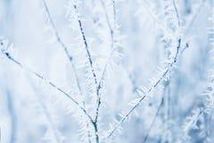 Frozen brancjh background Stock Photos