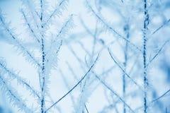 Frozen brancjh background Royalty Free Stock Photo