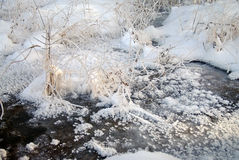 Frozen brook with plants Stock Photo