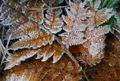 Frozen brown leaf fern with crystals at forest stock photo