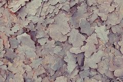 Frozen leaves background Stock Images