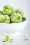 Frozen brussels sprouts Royalty Free Stock Photos
