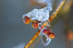 A frozen bud. A bud in the ice. Winter theme royalty free stock photos
