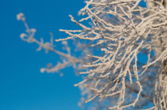 Frozen bush Royalty Free Stock Images