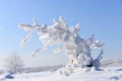 Frozen bush. Snow covered bush, frozen. Winter in Romania Royalty Free Stock Photo