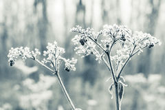 Frozen bush Stock Images
