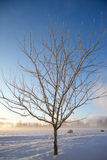 Frozen bush branch in sunny winter day Stock Image