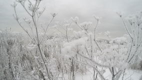 Frozen bush branches stock footage