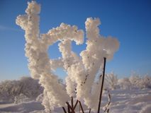 Frozen bush like a hand covered with hoarfrost royalty free stock photo