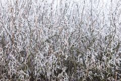 Frozen bush texture Royalty Free Stock Photography