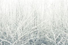 Frozen bushes Stock Photography