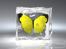 Frozen butterfly. An yellow butterfly frozen in an ice cube - rendered in 3d Royalty Free Stock Image
