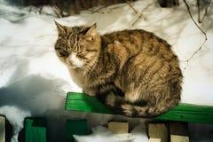 Frozen cat sits Stock Image