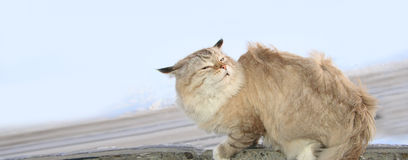 Frozen cat in the wind Royalty Free Stock Photo