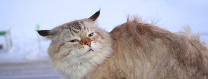 Frozen cat in the wind Royalty Free Stock Images