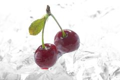 Frozen cherries Stock Photography