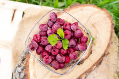 Frozen cherries in a bowl Royalty Free Stock Photography
