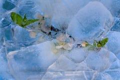 Frozen     cherry flower Stock Photo