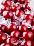Frozen cherry with ice. Food background Stock Images