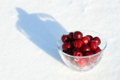 Frozen cherry on the snow Royalty Free Stock Photography